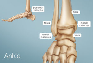 Ankle anatomy of a dislocated ankle